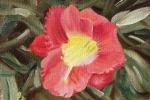Daylily 3
