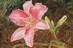 Daylily 2