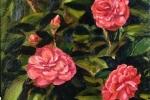 Pink Camelias Varnished - web large