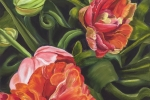 Tulip Bud to Blossom