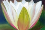 Water Lilly Three