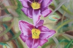 Daylily 5