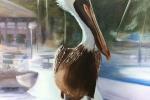 Dinner Key Pelican